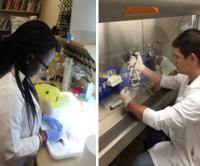 Undergraduate students doing biomedical research